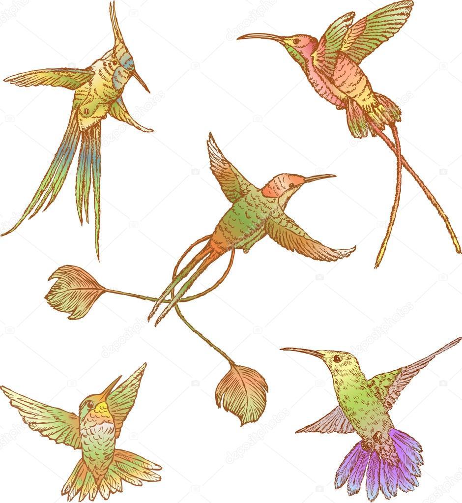 Vol D'Oiseaux Tropicaux — Image Vectorielle Mubaister avec Coloriage Oiseaux Tropicaux